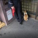【近鉄】吉野神宮の駅猫と駅員さんに会ってきた 大和上市~吉野神宮の鉄橋のある撮影地も紹介
