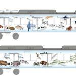 【新しい鮮魚列車】「伊勢志摩お魚図鑑」が連結される列車のダイヤまとめ