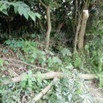 【さすがに酷い】撮り鉄が撮影のために線路沿いの標識を引っこ抜いてしまう 付近の木が切断される被害も